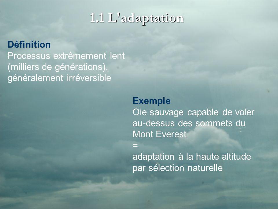 1.1 L adaptation Définition Processus extrêmement lent (milliers de générations), généralement irréversible Exemple Oie sauvage capable de voler au-dessus des sommets du Mont Everest = adaptation à la haute altitude par sélection naturelle