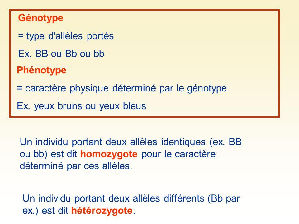 Génotype = type d'allèles portés Ex. BB ou Bb ou bb Phénotype = caractère physique déterminé par le génotype Ex. yeux bruns ou yeux bleus Un individu
