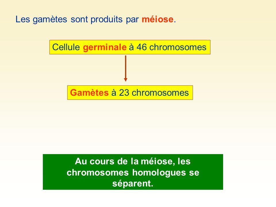 1 2 3 4 5 5 3 1 4 2 2 5 5 33 1 1 4 4 2 Cellule à 5 paires de chromosomes homologues.
