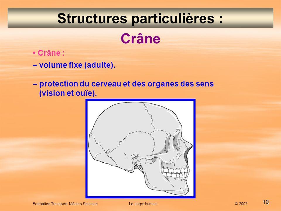 10 Formation Transport Médico Sanitaire Le corps humain © 2007 Structures particulières : Crâne : – volume fixe (adulte). – protection du cerveau et d