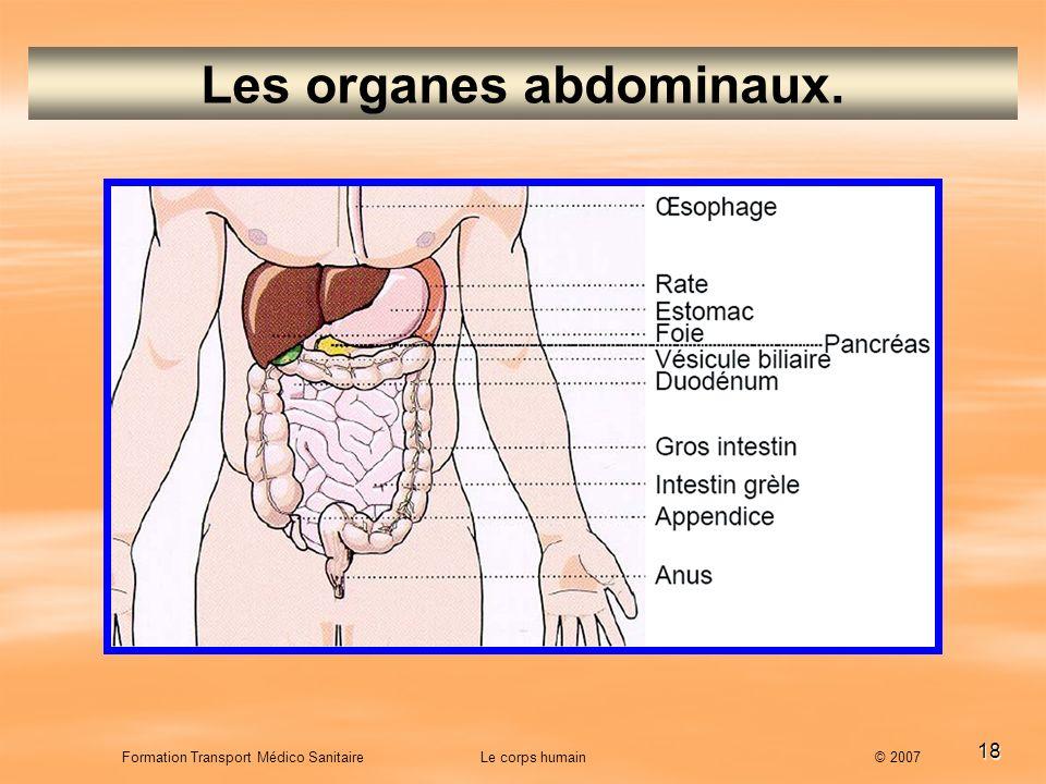 18 Formation Transport Médico Sanitaire Le corps humain © 2007 Les organes abdominaux.