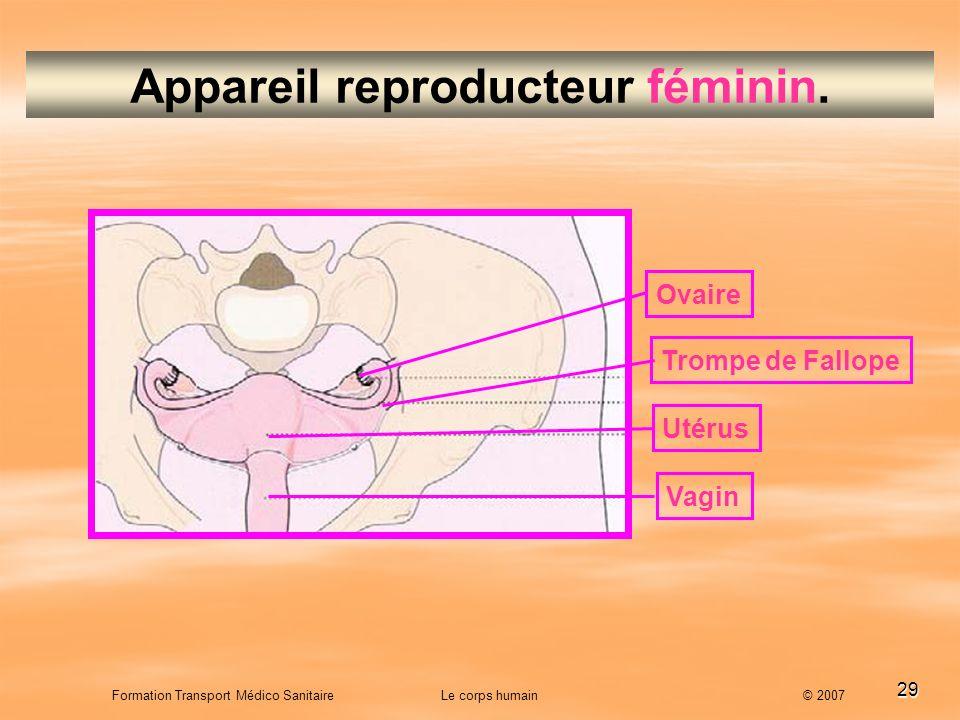 29 Formation Transport Médico Sanitaire Le corps humain © 2007 Appareil reproducteur féminin. Ovaire Trompe de Fallope Utérus Vagin