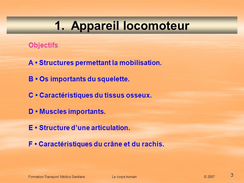 3 1. Appareil locomoteur A Structures permettant la mobilisation. B Os importants du squelette. C Caractéristiques du tissus osseux. D Muscles importa