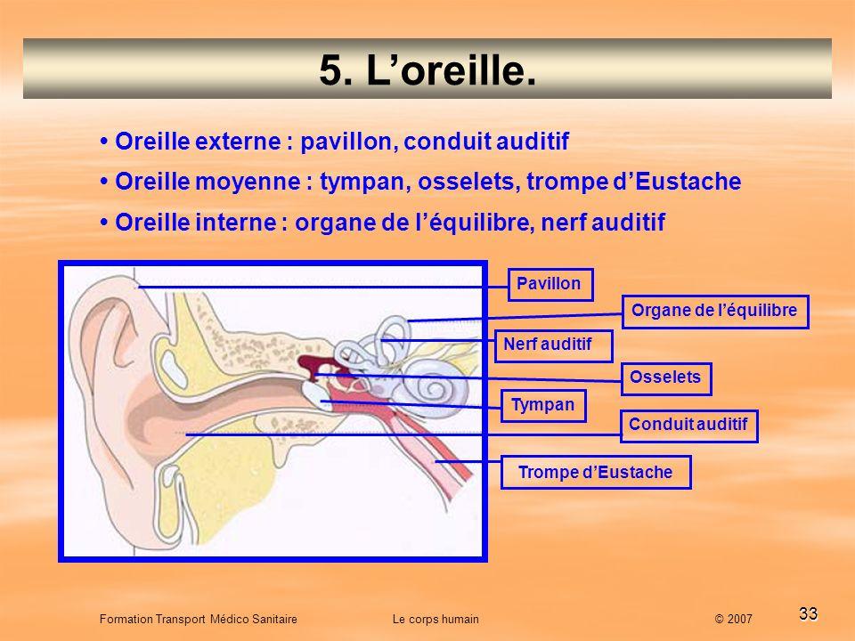 33 Formation Transport Médico Sanitaire Le corps humain © 2007 5. Loreille. Oreille externe : pavillon, conduit auditif Oreille moyenne : tympan, osse