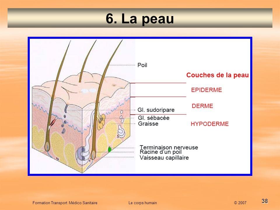 38 Formation Transport Médico Sanitaire Le corps humain © 2007 6. La peau