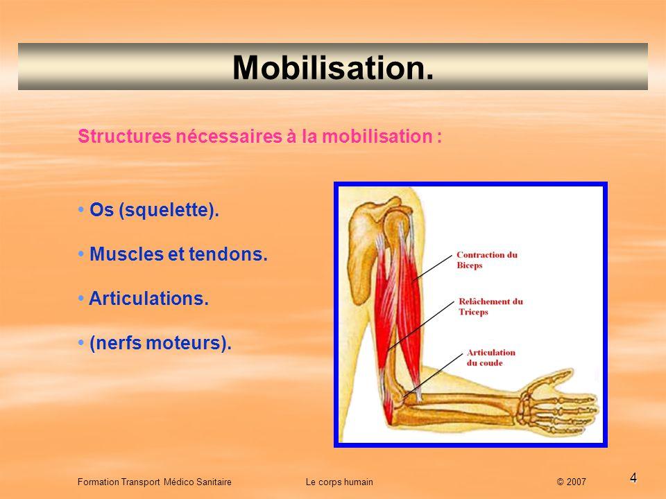 4 Mobilisation. Structures nécessaires à la mobilisation : Os (squelette). Muscles et tendons. Articulations. (nerfs moteurs). Formation Transport Méd