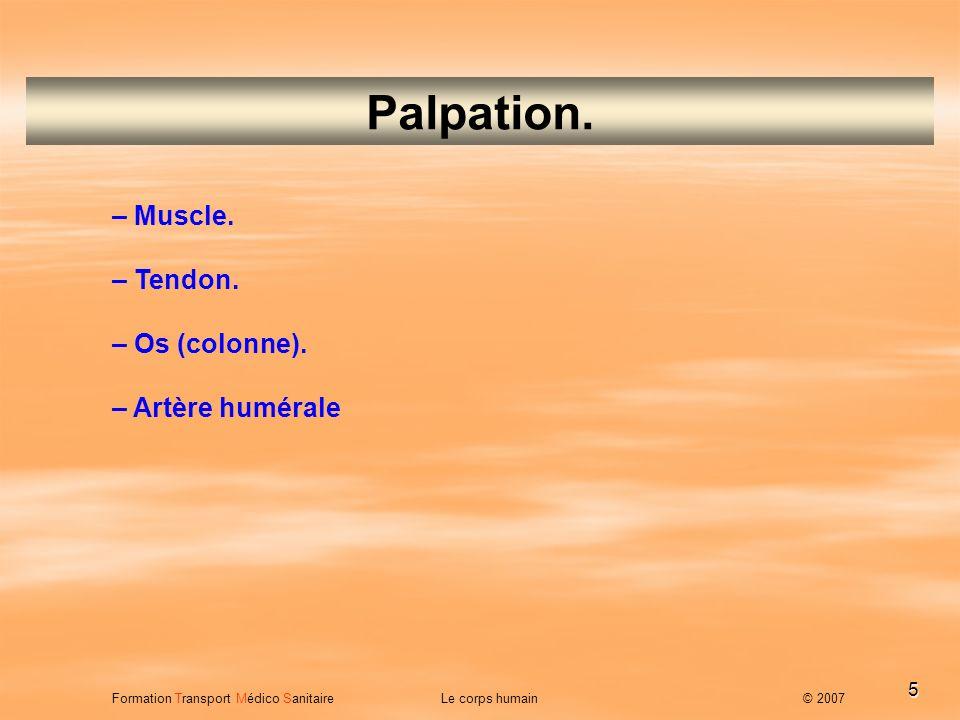5 Palpation. – Muscle. – Tendon. – Os (colonne). – Artère humérale