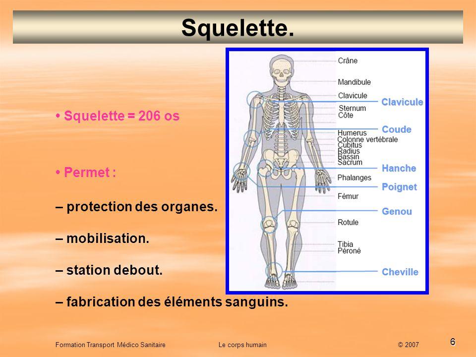 6 Formation Transport Médico Sanitaire Le corps humain © 2007 Squelette. Squelette = 206 os Permet : – protection des organes. – mobilisation. – stati