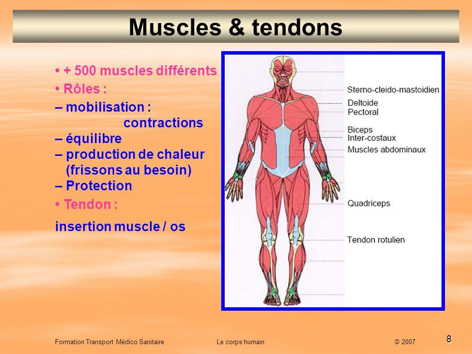 8 Formation Transport Médico Sanitaire Le corps humain © 2007 Muscles & tendons + 500 muscles différents Rôles : – mobilisation : contractions – équil
