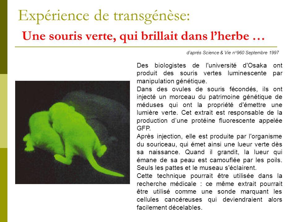 Expérience de transgénèse: Une souris verte, qui brillait dans lherbe … daprès Science & Vie n°960 Septembre 1997 Des biologistes de l université d Osaka ont produit des souris vertes luminescente par manipulation génétique.