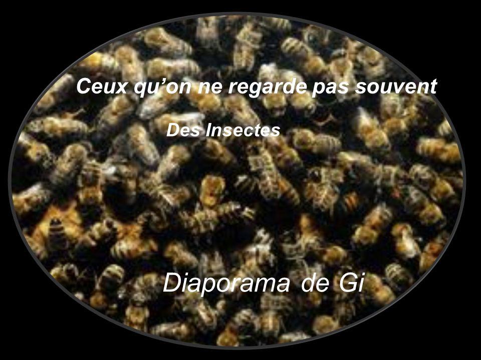 Ceux quon ne regarde pas souvent Des Insectes Diaporama de Gi
