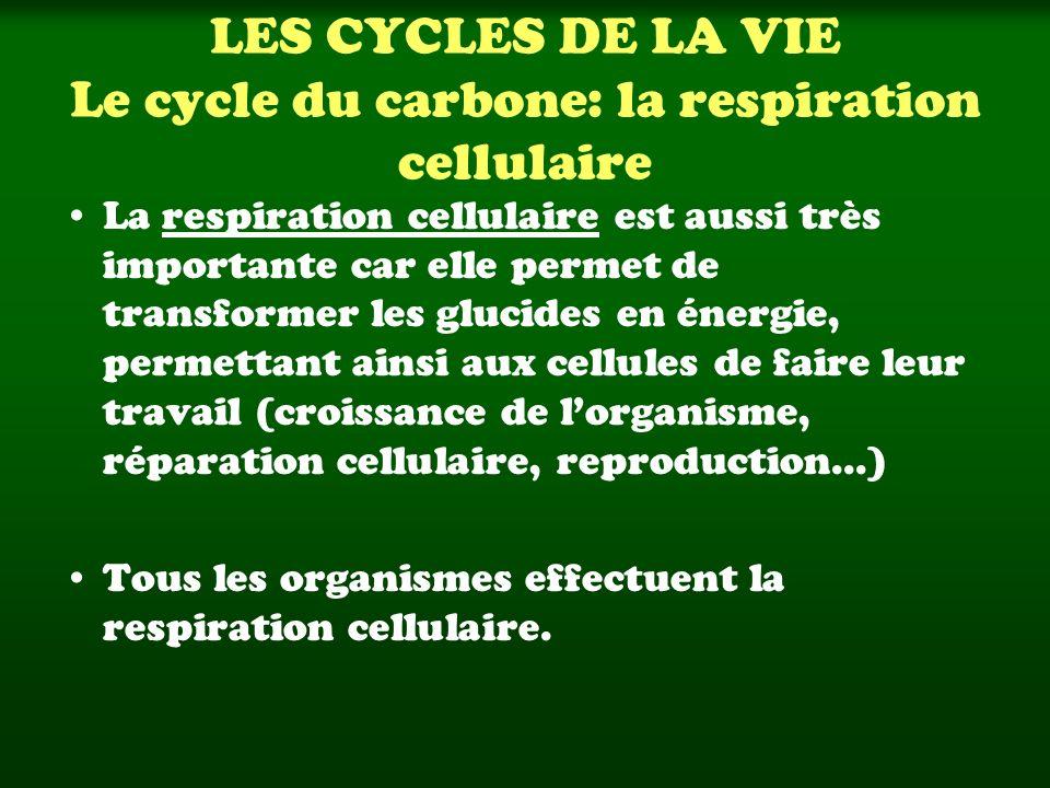 LES CYCLES DE LA VIE Le cycle du carbone: la respiration cellulaire La respiration cellulaire est aussi très importante car elle permet de transformer