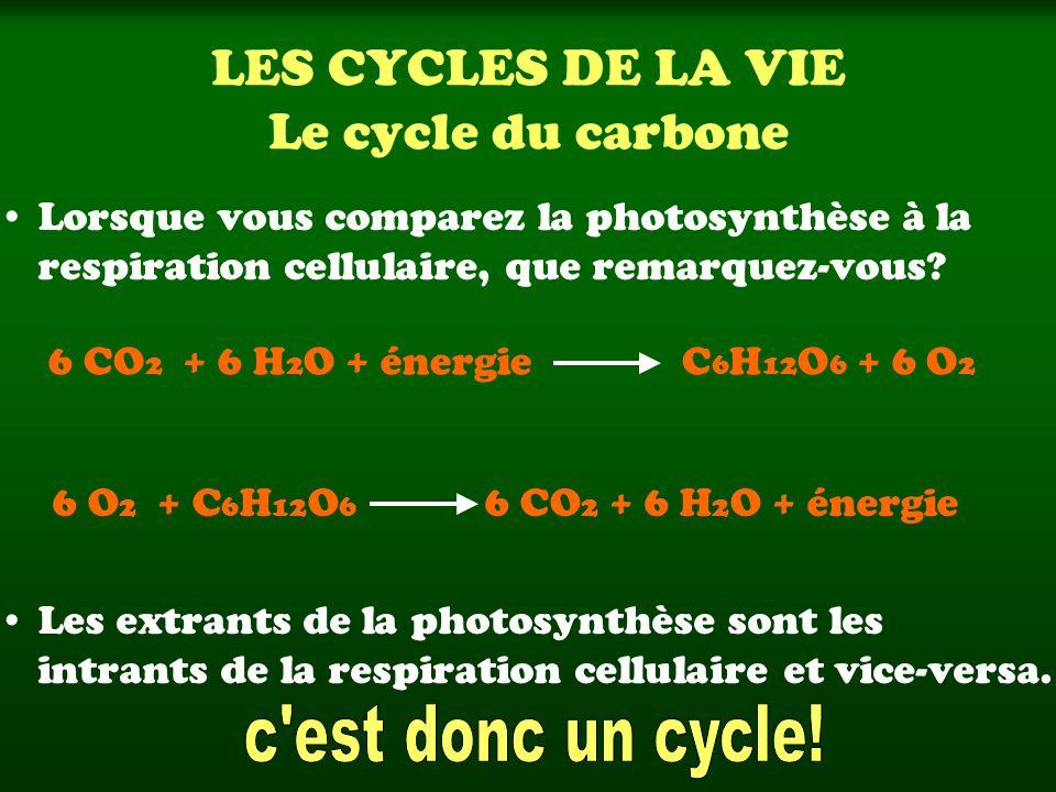 LES CYCLES DE LA VIE Le cycle du carbone Lorsque vous comparez la photosynthèse à la respiration cellulaire, que remarquez-vous? Les extrants de la ph
