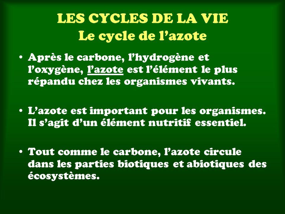 LES CYCLES DE LA VIE Le cycle de lazote Après le carbone, lhydrogène et loxygène, lazote est lélément le plus répandu chez les organismes vivants. Laz