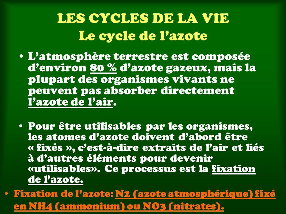 LES CYCLES DE LA VIE Le cycle de lazote Latmosphère terrestre est composée denviron 80 % dazote gazeux, mais la plupart des organismes vivants ne peuvent pas absorber directement lazote de lair.