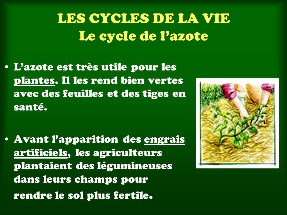 LES CYCLES DE LA VIE Le cycle de lazote Lazote est très utile pour les plantes. Il les rend bien vertes avec des feuilles et des tiges en santé. Avant