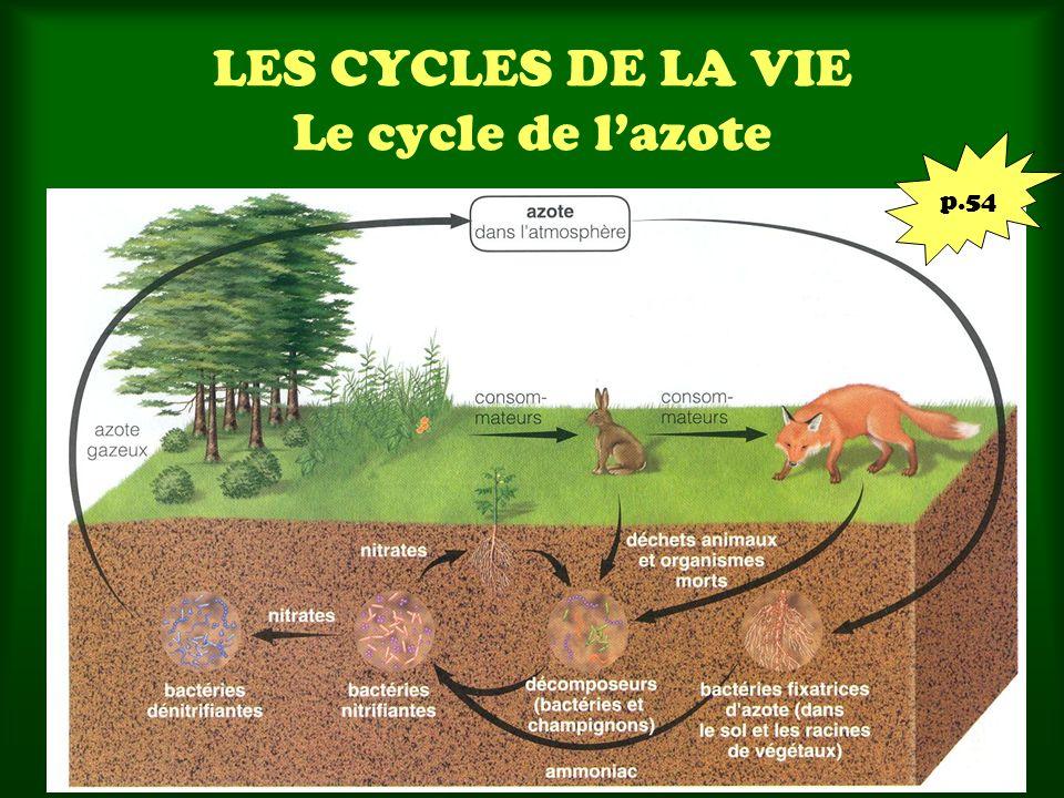 LES CYCLES DE LA VIE Le cycle de lazote p.54