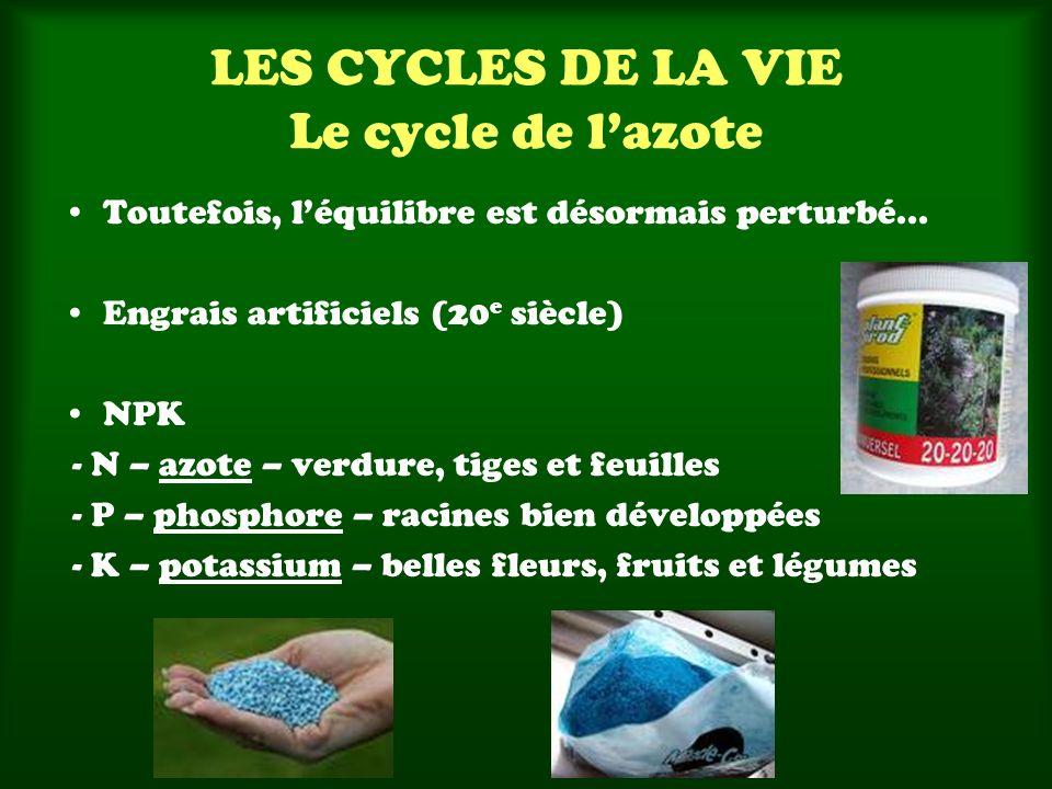 LES CYCLES DE LA VIE Le cycle de lazote Toutefois, léquilibre est désormais perturbé... Engrais artificiels (20 e siècle) NPK - N – azote – verdure, t