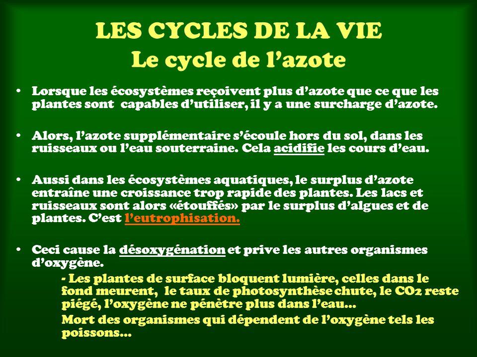 LES CYCLES DE LA VIE Le cycle de lazote Lorsque les écosystèmes reçoivent plus dazote que ce que les plantes sont capables dutiliser, il y a une surch