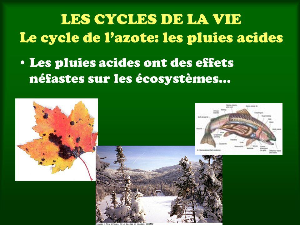 LES CYCLES DE LA VIE Le cycle de lazote: les pluies acides Les pluies acides ont des effets néfastes sur les écosystèmes...