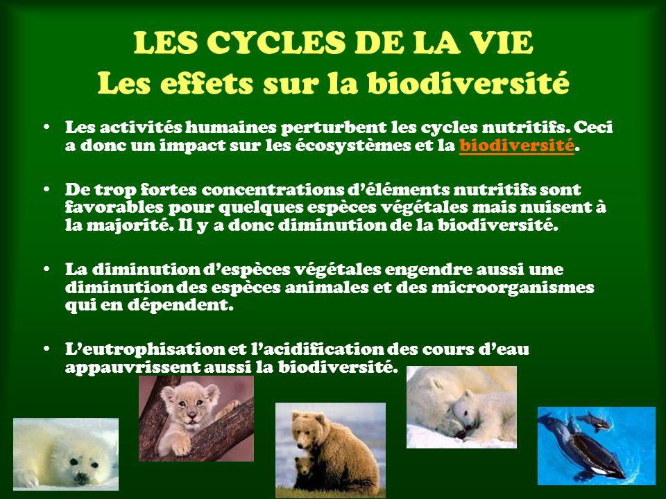 LES CYCLES DE LA VIE Les effets sur la biodiversité Les activités humaines perturbent les cycles nutritifs. Ceci a donc un impact sur les écosystèmes