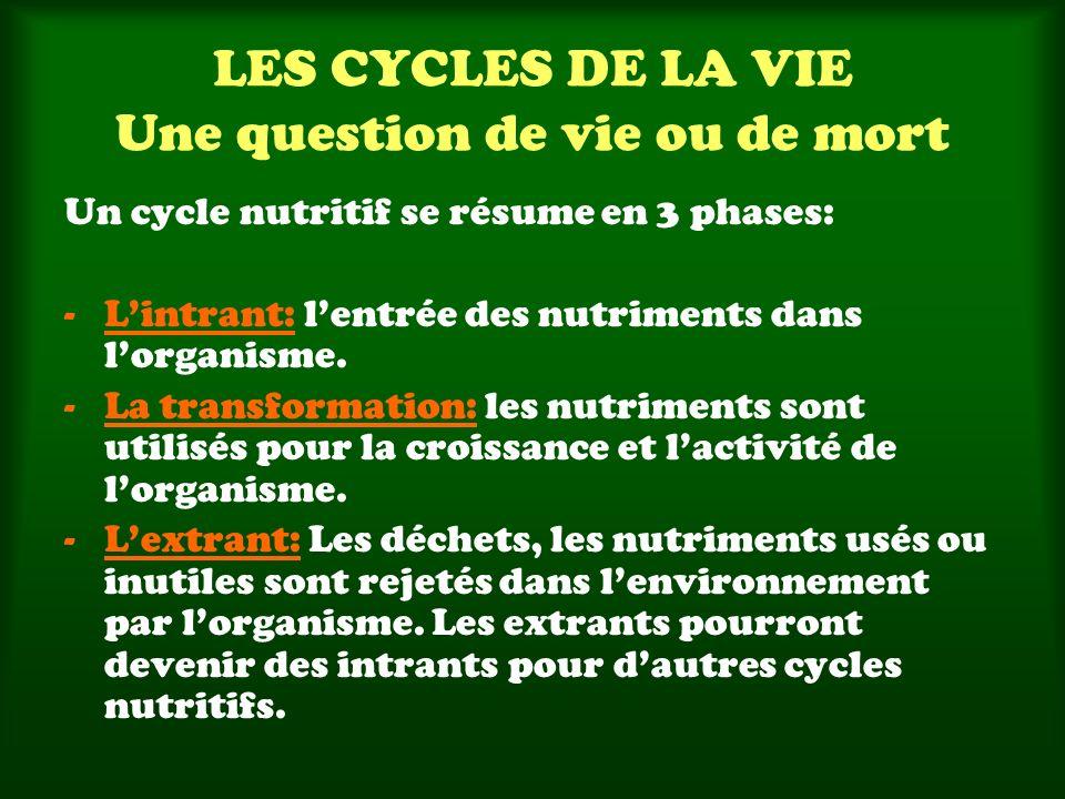 Un cycle nutritif se résume en 3 phases: -Lintrant: lentrée des nutriments dans lorganisme. -La transformation: les nutriments sont utilisés pour la c