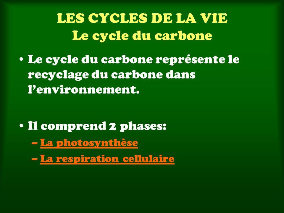 LES CYCLES DE LA VIE Le cycle du carbone Le cycle du carbone représente le recyclage du carbone dans lenvironnement. Il comprend 2 phases: –La photosy