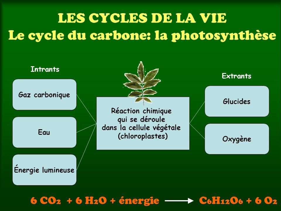 LES CYCLES DE LA VIE Le cycle du carbone: la photosynthèse Réaction chimique qui se déroule dans la cellule végétale (chloroplastes) Gaz carbonique Ea