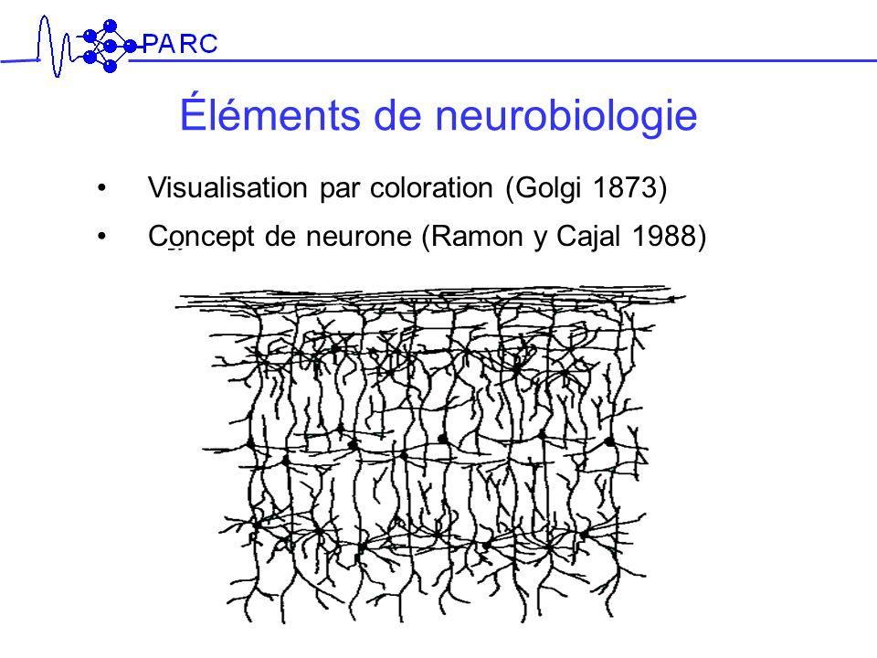 Éléments de neurobiologie Visualisation par coloration (Golgi 1873) Concept de neurone (Ramon y Cajal 1988)