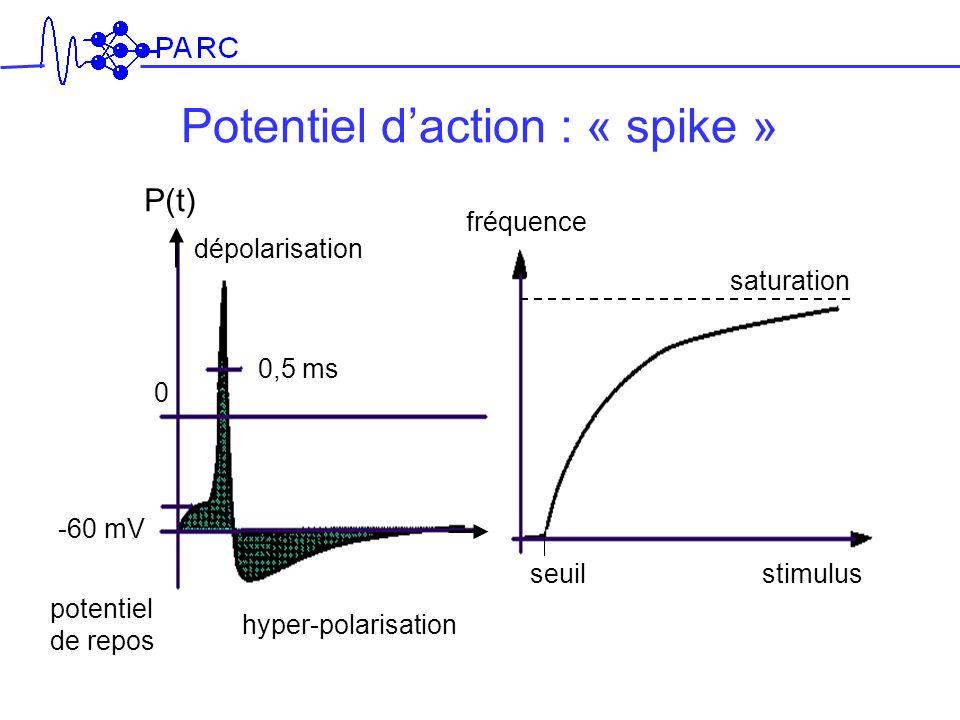 P(t) saturation hyper-polarisation -60 mV 0 0,5 ms dépolarisation fréquence seuilstimulus Potentiel daction : « spike » potentiel de repos