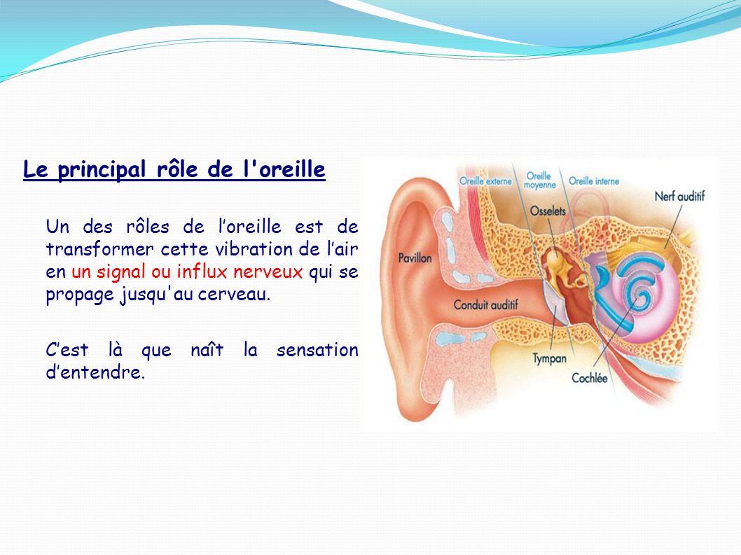 Le principal rôle de l'oreille Un des rôles de loreille est de transformer cette vibration de lair en un signal ou influx nerveux qui se propage jusqu