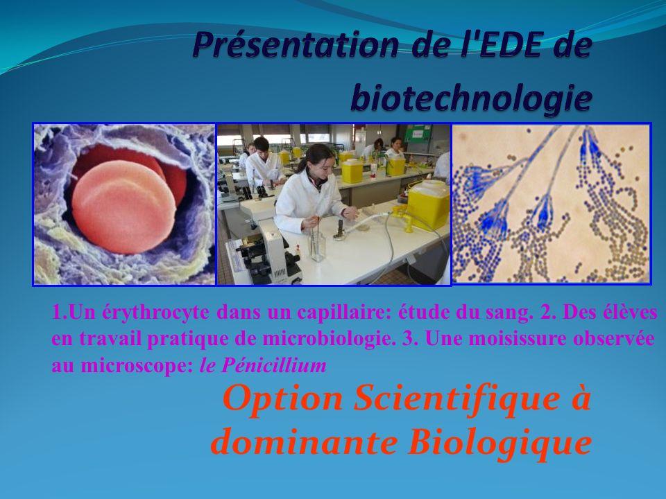 Option Scientifique à dominante Biologique 1.Un érythrocyte dans un capillaire: étude du sang. 2. Des élèves en travail pratique de microbiologie. 3.