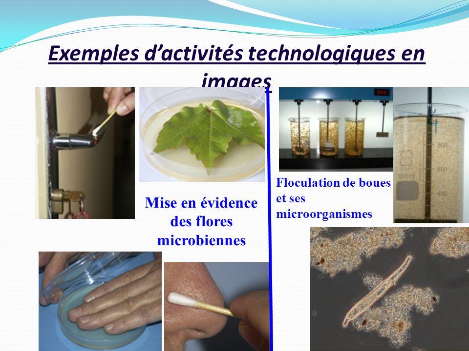 Exemples dactivités technologiques en images Mise en évidence des flores microbiennes Floculation de boues et ses microorganismes