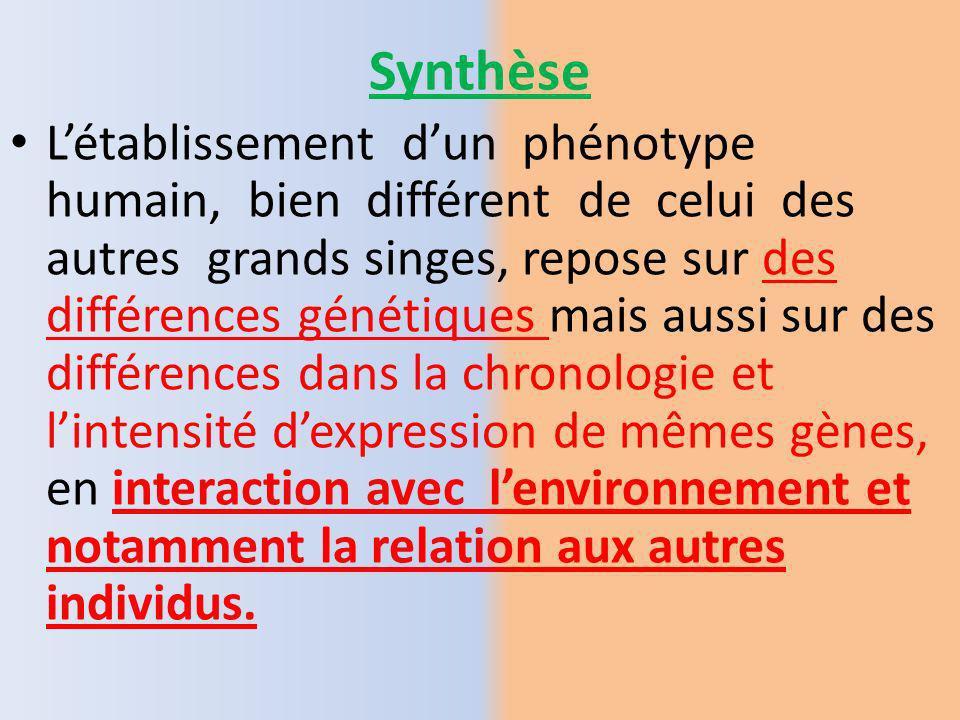 Importance du contrôle de la chronologie du développement. Le phénotype de chaque espèce sacquiert au cours du développement pré et postnatal. Pour ch
