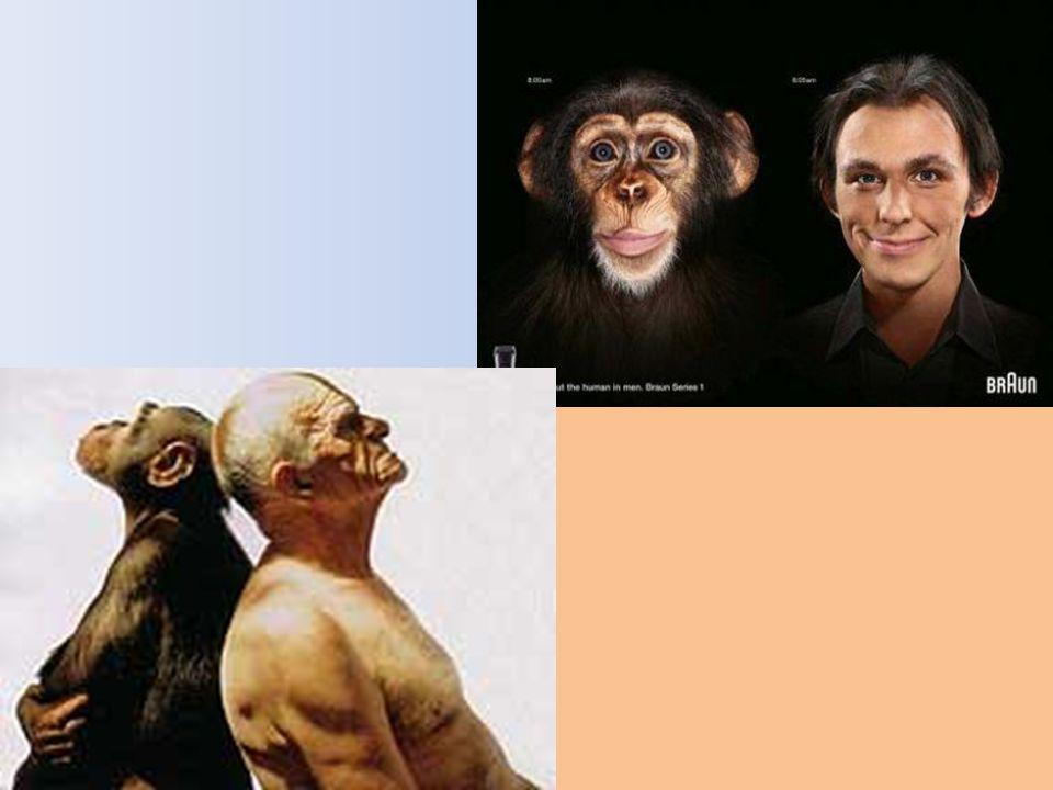Synthèse Létablissement dun phénotype humain, bien différent de celui des autres grands singes, repose sur des différences génétiques mais aussi sur d