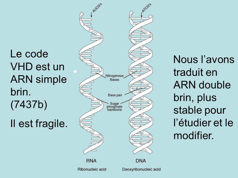 Le code VHD est un ARN simple brin. (7437b) Il est fragile. Nous lavons traduit en ARN double brin, plus stable pour létudier et le modifier.
