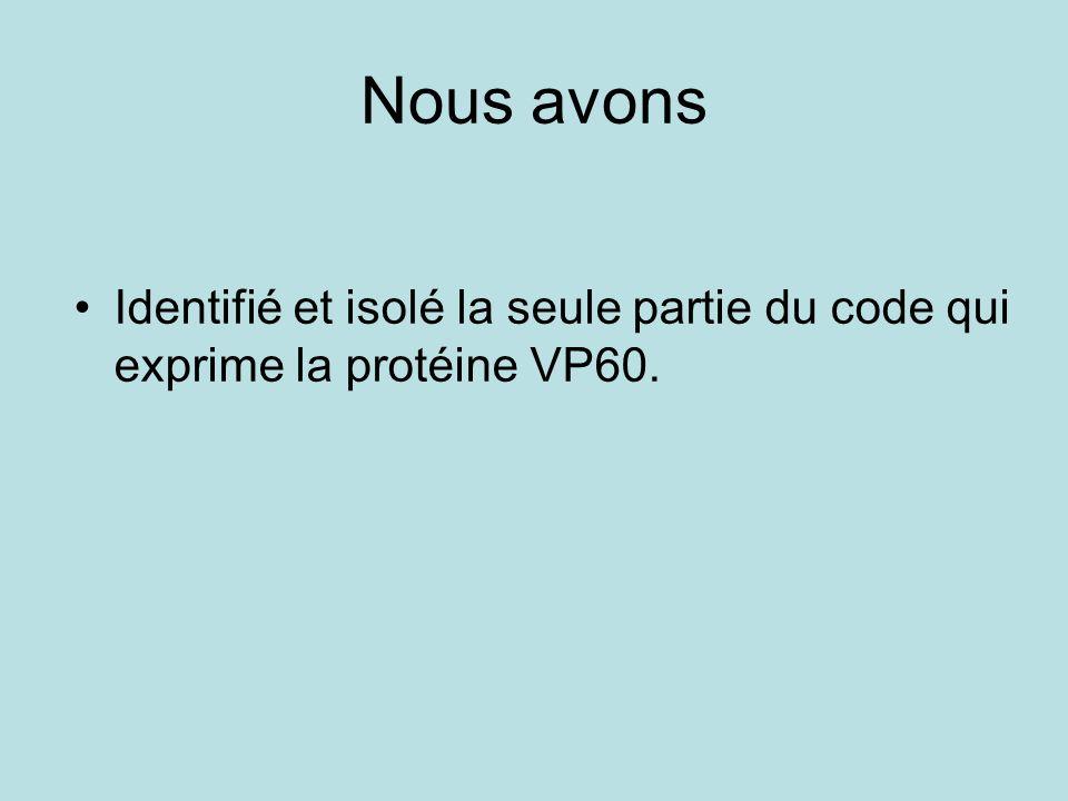 Nous avons Identifié et isolé la seule partie du code qui exprime la protéine VP60.