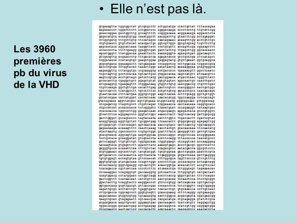 Les 3960 premières pb du virus de la VHD Elle nest pas là.