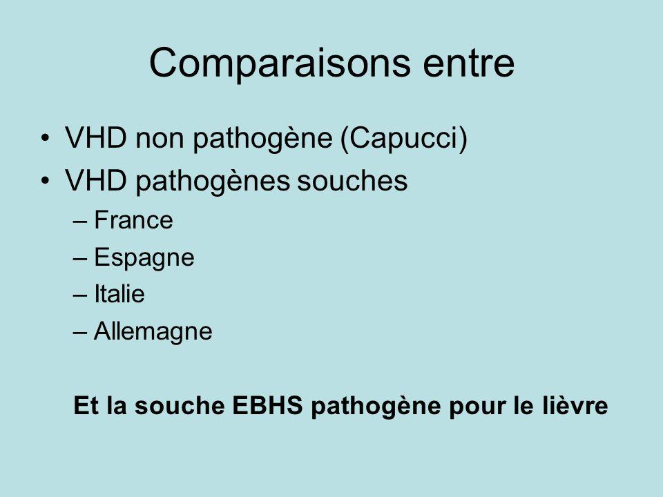 Comparaisons entre VHD non pathogène (Capucci) VHD pathogènes souches –France –Espagne –Italie –Allemagne Et la souche EBHS pathogène pour le lièvre