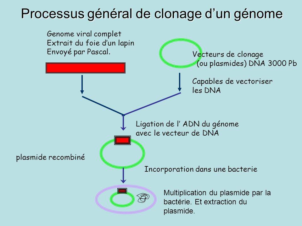 Genome viral complet Extrait du foie dun lapin Envoyé par Pascal. Vecteurs de clonage (ou plasmides) DNA 3000 Pb Capables de vectoriser les DNA Ligati