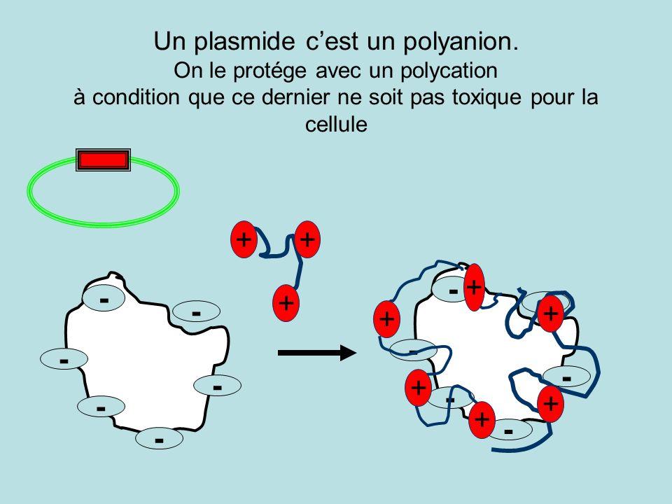 Un plasmide cest un polyanion. On le protége avec un polycation à condition que ce dernier ne soit pas toxique pour la cellule - - - - - - - - - - - -