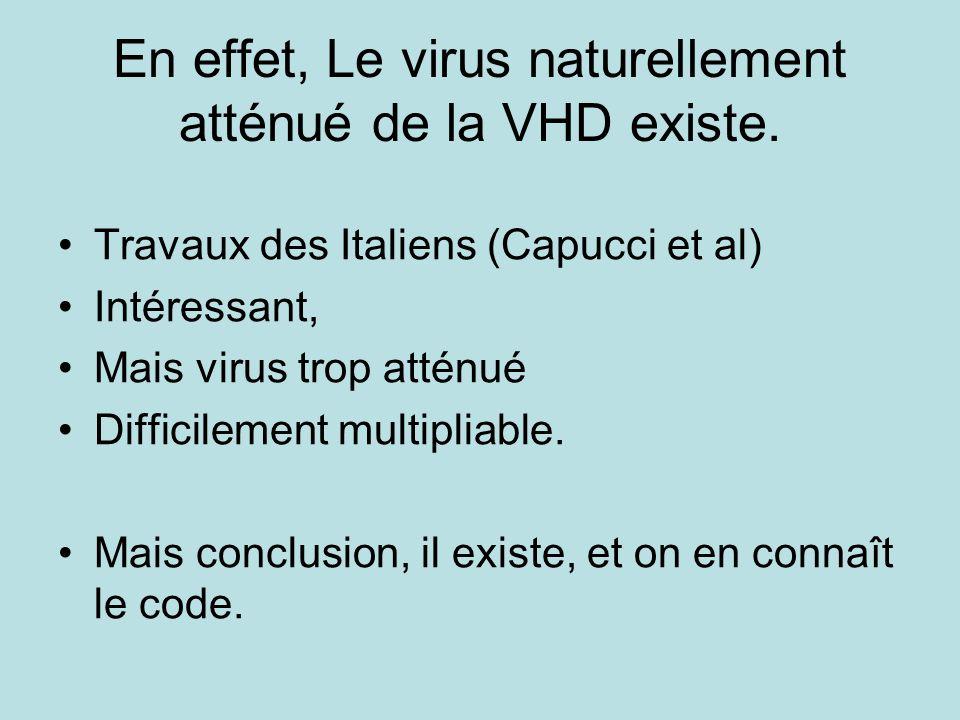 En effet, Le virus naturellement atténué de la VHD existe. Travaux des Italiens (Capucci et al) Intéressant, Mais virus trop atténué Difficilement mul