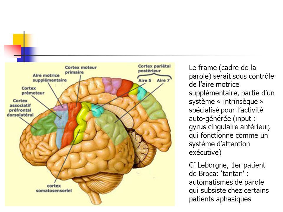 Le frame (cadre de la parole) serait sous contrôle de laire motrice supplémentaire, partie dun système « intrinsèque » spécialisé pour lactivité auto-générée (input : gyrus cingulaire antérieur, qui fonctionne comme un système dattention exécutive) Cf Leborgne, 1er patient de Broca: tantan : automatismes de parole qui subsiste chez certains patients aphasiques