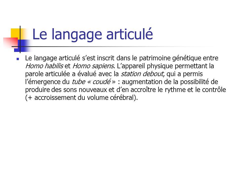 Le langage articulé Le langage articulé sest inscrit dans le patrimoine génétique entre Homo habilis et Homo sapiens.