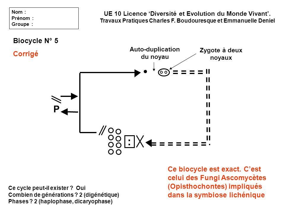 Ce cycle peut-il exister ? Oui Combien de générations ? 2 (digénétique) Phases ? 2 (haplophase, dicaryophase) UE 10 Licence Diversité et Evolution du