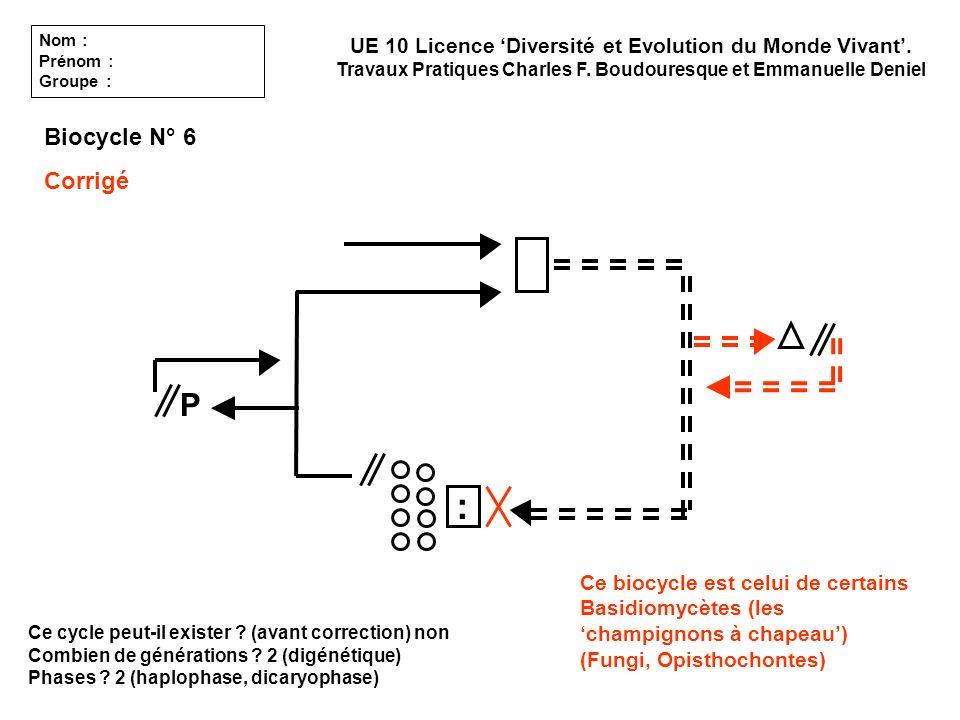 Ce cycle peut-il exister ? (avant correction) non Combien de générations ? 2 (digénétique) Phases ? 2 (haplophase, dicaryophase) UE 10 Licence Diversi