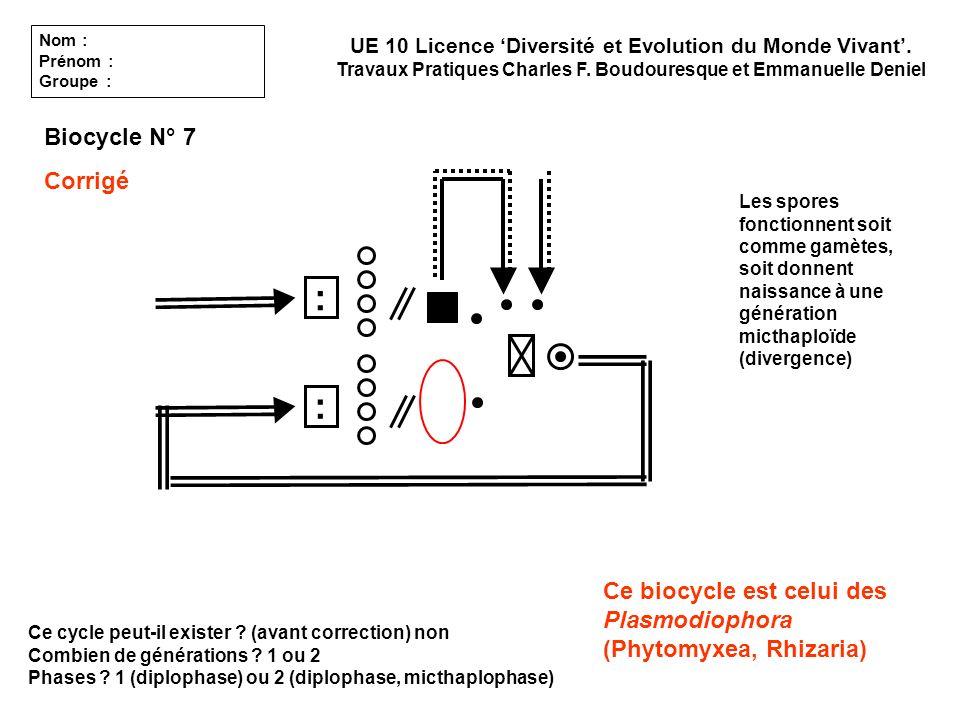 Ce cycle peut-il exister ? (avant correction) non Combien de générations ? 1 ou 2 Phases ? 1 (diplophase) ou 2 (diplophase, micthaplophase) UE 10 Lice