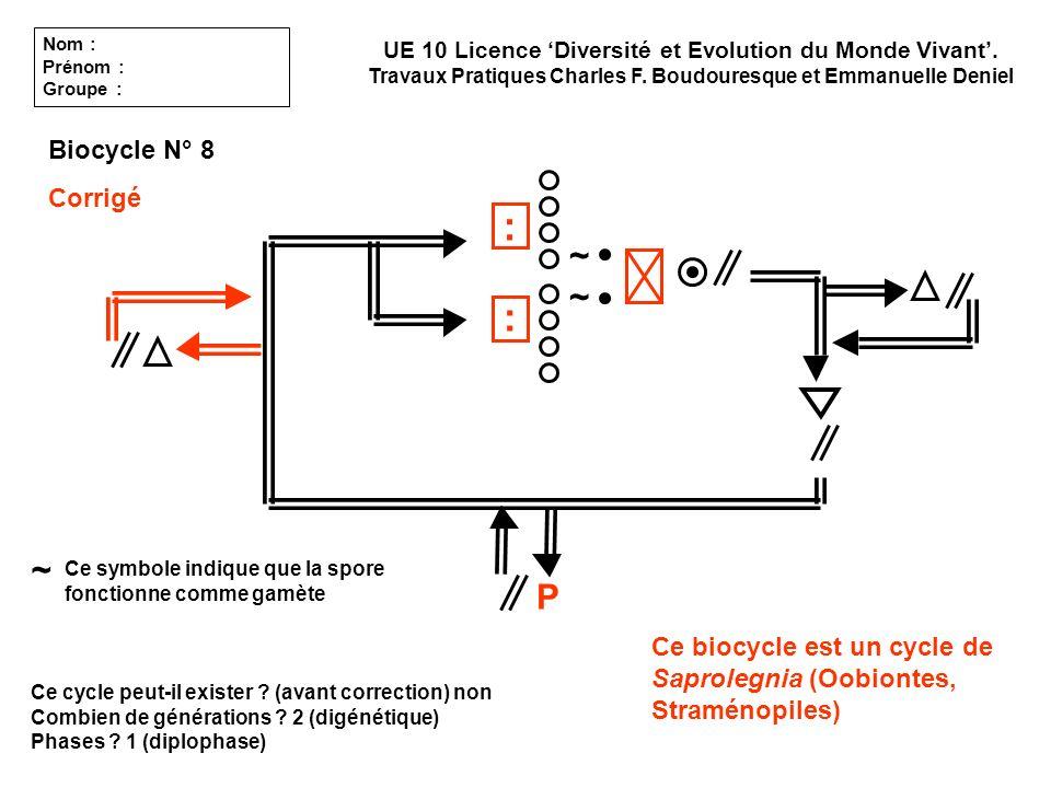 Ce cycle peut-il exister ? (avant correction) non Combien de générations ? 2 (digénétique) Phases ? 1 (diplophase) UE 10 Licence Diversité et Evolutio