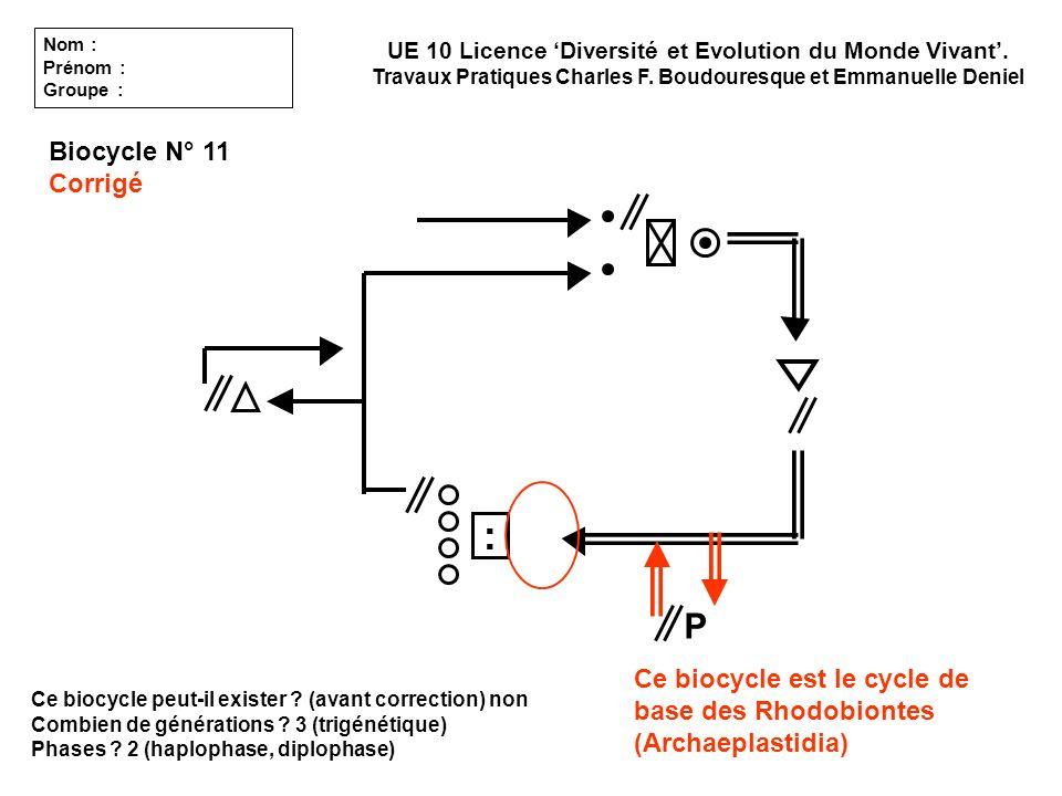 Ce biocycle peut-il exister ? (avant correction) non Combien de générations ? 3 (trigénétique) Phases ? 2 (haplophase, diplophase) UE 10 Licence Diver