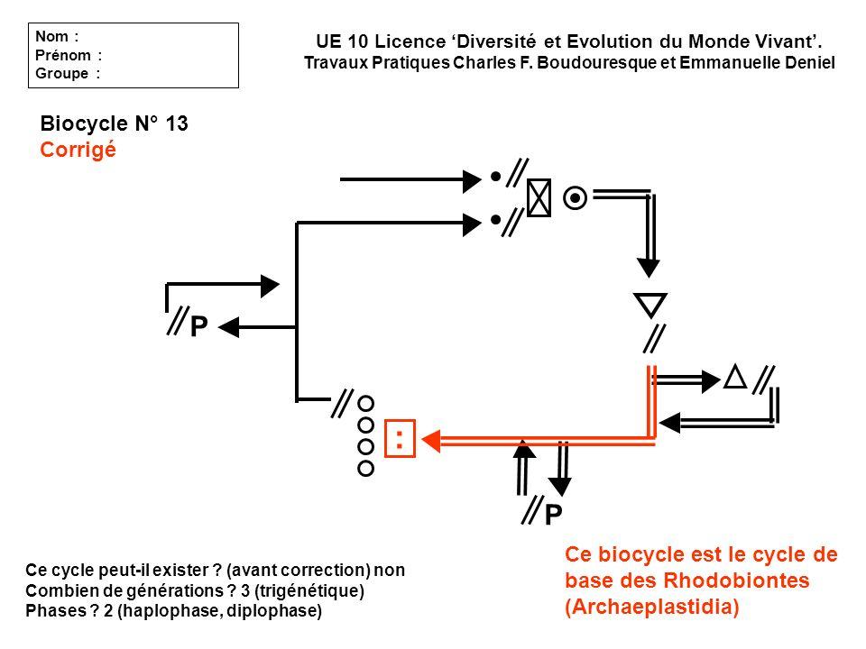 Ce cycle peut-il exister ? (avant correction) non Combien de générations ? 3 (trigénétique) Phases ? 2 (haplophase, diplophase) UE 10 Licence Diversit